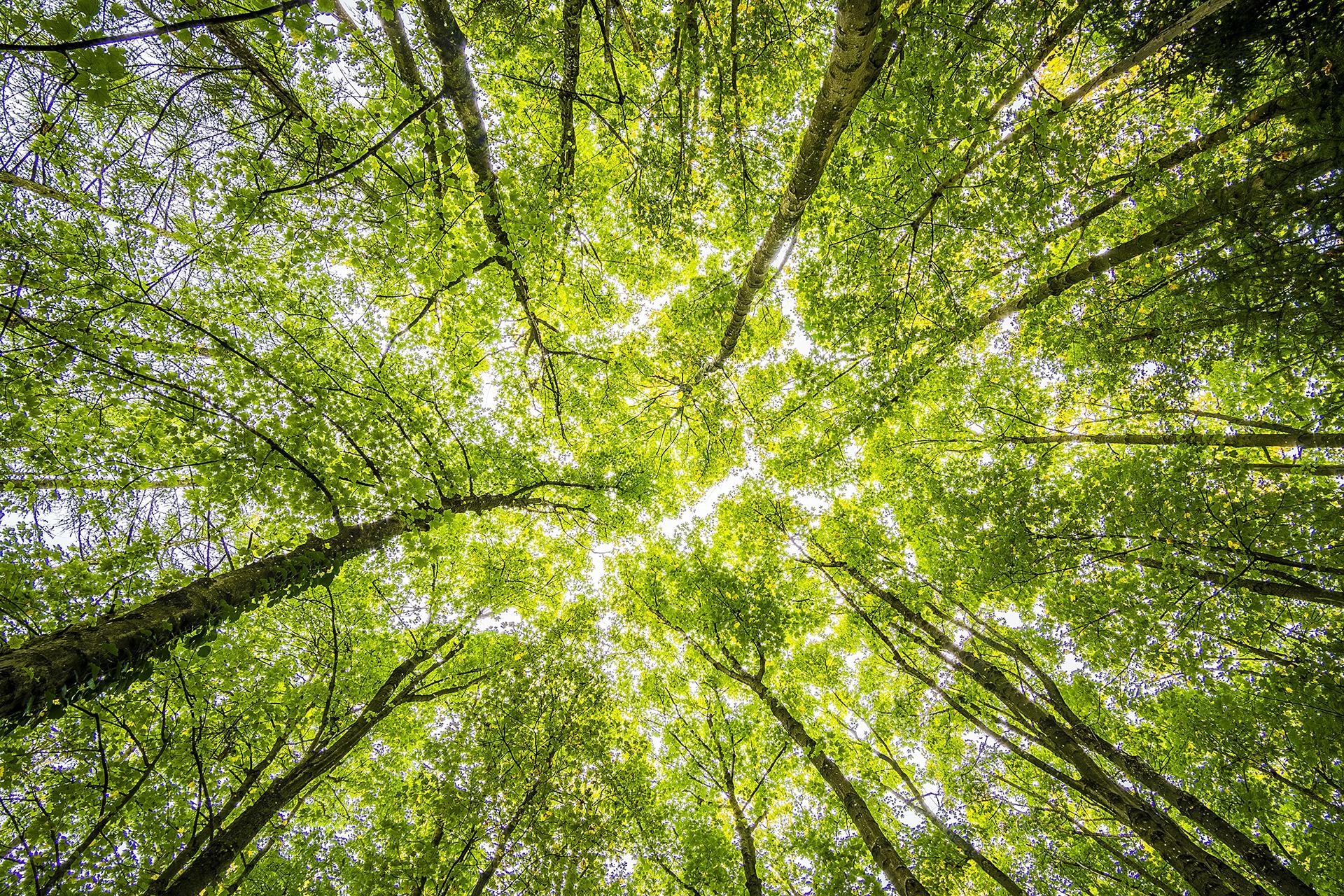 El vínculo entre el ambiente y las enfermedades