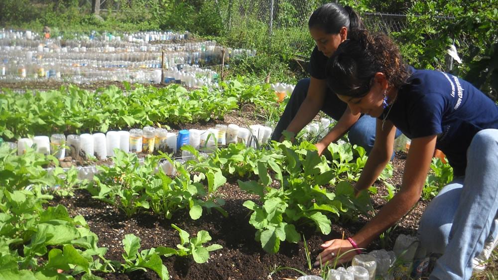 El Día mundial de la alimentación